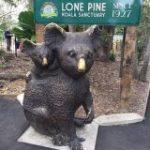 【ゴールドコースト】世界最大のコアラ規模動物園!観光するならローン・パイン・コアラ・サンクチュアリ格安チケットで行く