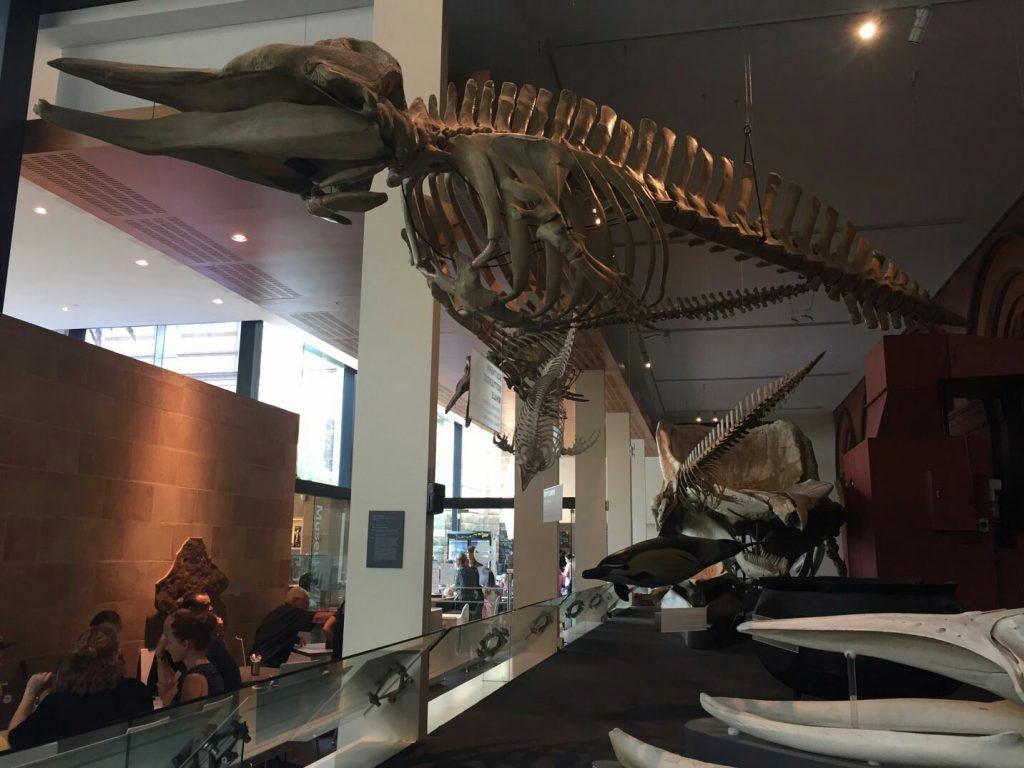 アデレード博物館
