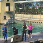【ゴールドコースト】シーワールド水族館のイルカとアシカは天才だった!損はさせない格安に入場する方法&行き方