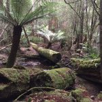 【タスマニア】美味しい空気を吸いに世界遺産マウントフィールド国立公園へ行こう【ホバート】