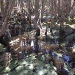 【タスマニア】野生動物の楽園ナラウンタプ国立公園は見所満載!カモノハシはどこへ【デボンポート】